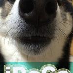 iDeCo開始4ヶ月で初めてのプラス益
